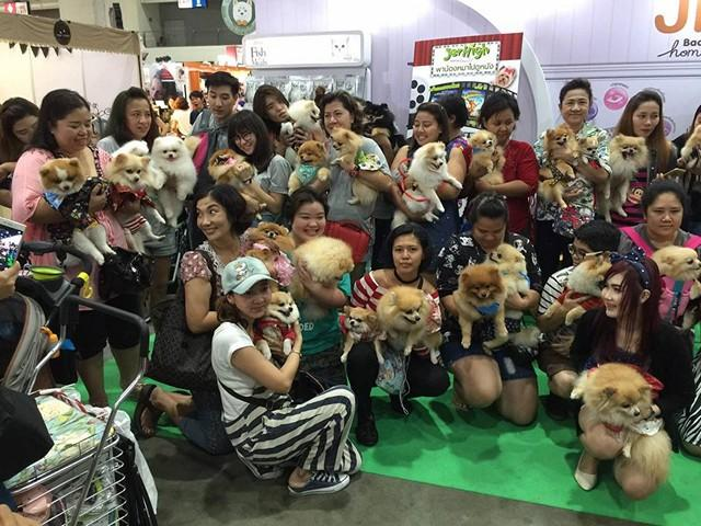 thailand_international_dog_show_2016_4