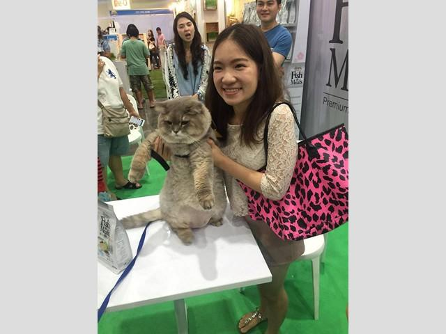 thailand_international_dog_show_2016_6